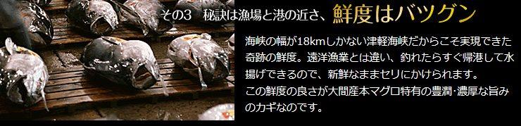 鮮度バツグン 豊潤 濃厚 大間産 本マグロ
