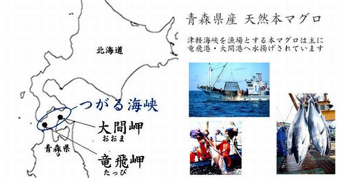 青森県産 大間 天然 本マグロ 漁場